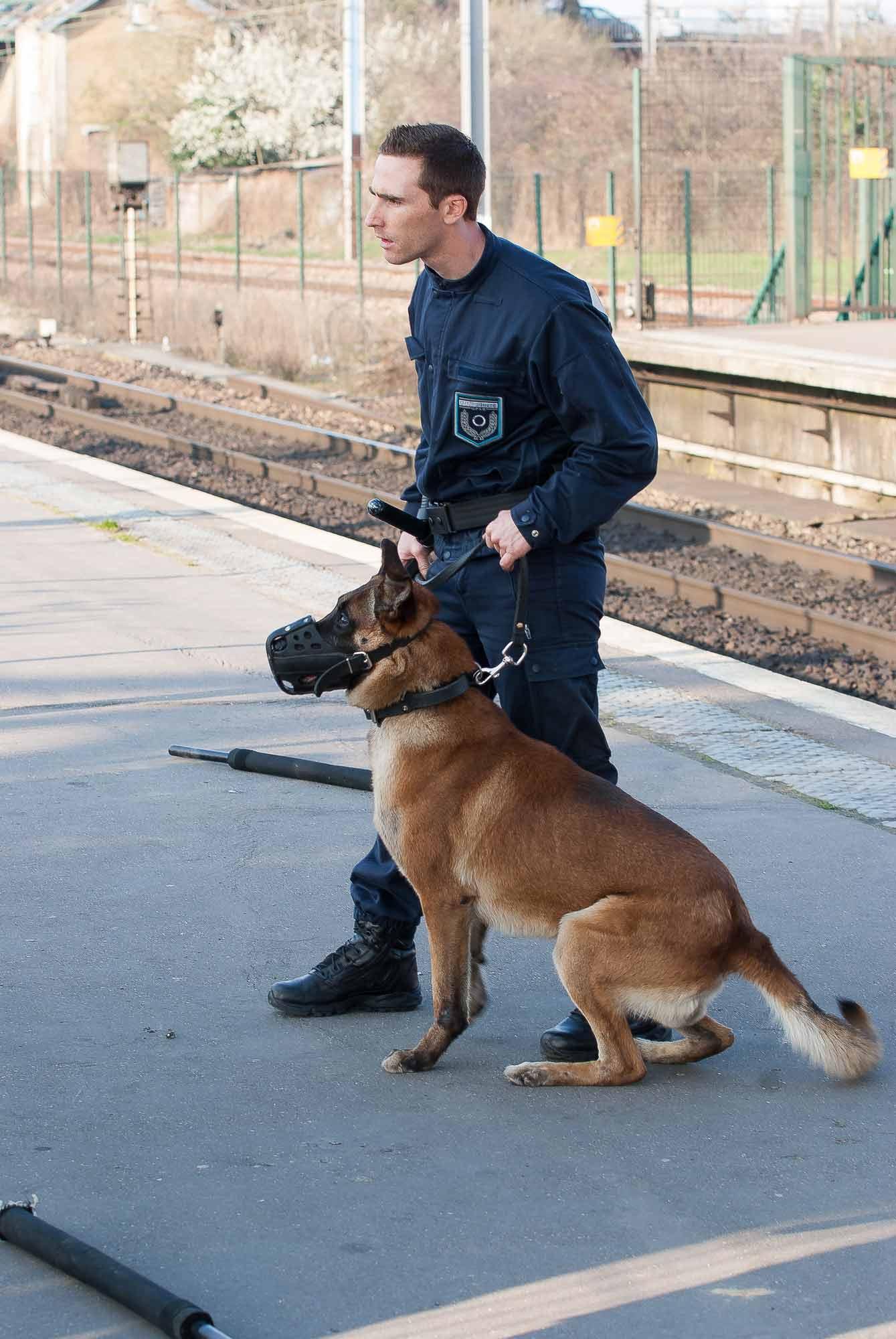 Dressage chien de défense, ILLY FRANCOIS sirius éducation canine