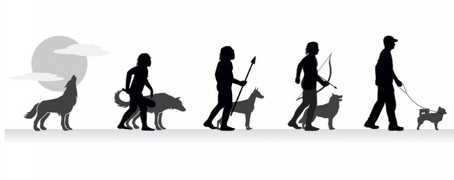 Phylogenèse du chien- Le chien est-il un loup ? Avis du Dr Coppinger